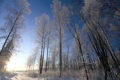 Winterbäume und blauer Himmel Lizenzfreie Stockfotos