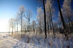 Winterbäume und blauer Himmel Lizenzfreies Stockfoto
