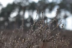 Winterbüsche Stockbilder