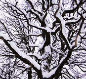 Winterbaum stockfotos