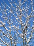 Winterbaum Lizenzfreies Stockbild