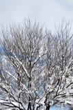 Winterbaum Lizenzfreie Stockbilder