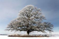 Winterbaum stockbilder