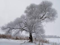 Winterbaum Lizenzfreie Stockfotos