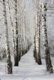 Winterbaum lizenzfreie stockfotografie