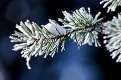 Winterbaum Stockbild