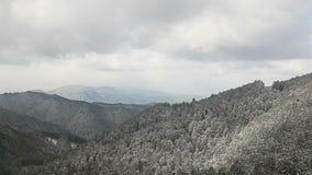 Winterbaum auf Berg stock video footage
