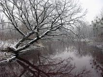 Winterbaum auf dem Fluss Stockbild
