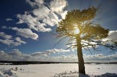 Winterbaum auf dem Schneefeld Stockfotos