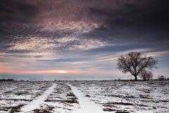 Winterbaum auf einem Gebiet mit drastischem Himmel Stockfoto