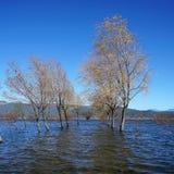 Winterbaum, der im See steht Lizenzfreies Stockfoto