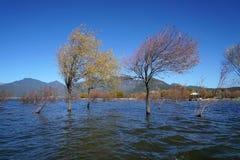 Winterbaum, der im See steht Lizenzfreies Stockbild