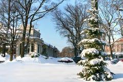 Winterbaum in der Mitte von Riga Lizenzfreies Stockbild