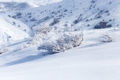 Winterbaum in der Natur Lizenzfreie Stockfotos