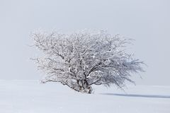 Winterbaum in der Natur Stockfoto