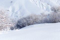 Winterbaum in der Natur Lizenzfreies Stockfoto