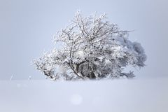 Winterbaum in der Natur Stockfotos