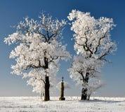 Winterbaum in der Tschechischen Republik Stockfoto