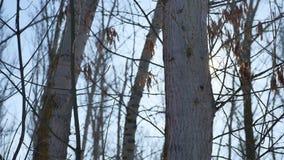 WinterBaum- des Waldesnatur im Schneegrellen glanz der Sonne, Sonnenlichtlandschaft stock footage