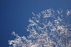 Winterbaum an einem kalten sonnigen Tag Lizenzfreie Stockbilder