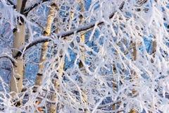 Winterbaum einer Birke mit weißem Schnee und Reif Lizenzfreie Stockfotografie