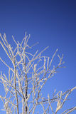 Winterbaum gegen blauen Himmel Stockfotos