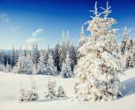 Winterbaum im Schnee Stockfotografie