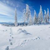 Winterbaum im Schnee Stockbild