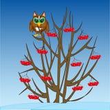 Winterbaum mit Frucht und Eule auf Niederlassung stockfotografie