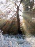 Winterbaum mit Sonnenstrahlen Lizenzfreie Stockfotografie