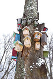 Winterbaum mit Vögel Verschachtelungkästen Ansammlung Stockfotografie