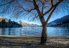 Winterbaum am Seeufer Stockfoto