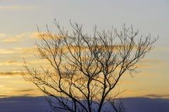 Winterbaum silhouettiert gegen eary Morgen des goldenen Sonnenaufganghimmels Lizenzfreies Stockfoto