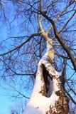 Winterbaum und blauer Himmel Lizenzfreies Stockfoto