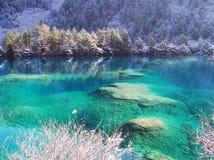 Winterbaum und -see in Jiuzhaigou stockfotos