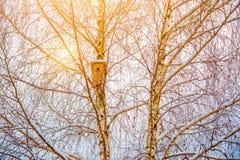 Winterbaum und -sonne Stockfoto