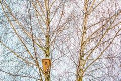 Winterbaum und Vogel ` s Kasten Lizenzfreies Stockfoto
