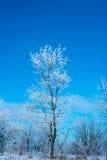 Winterbaum am vollen Tag Blauer Himmel Lizenzfreie Stockfotos