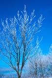 Winterbaum am vollen Tag Blauer Himmel Lizenzfreie Stockfotografie