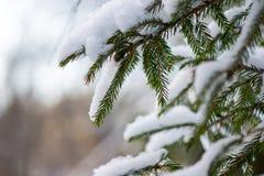 Winterbaumaste in der abstrakten Beschaffenheit Lizenzfreies Stockbild