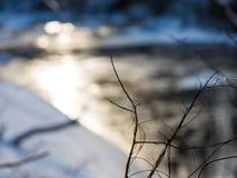 Winterbaumaste in der abstrakten Beschaffenheit Stockbild