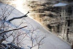 Winterbaumaste in der abstrakten Beschaffenheit Lizenzfreie Stockfotos