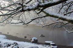 Winterbaumaste, die den Wasserrand überhängen Stockbilder