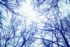 Winterbaumaste gegen den Himmel Stockfoto