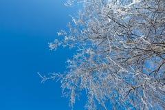 Winterbaumaste horizontal Lizenzfreies Stockbild