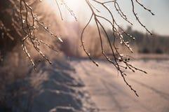 Winterbaumaste im Sonnenlicht Stockbild
