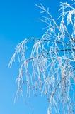 Winterbaumaste umfasst mit Frostschnee Stockfoto