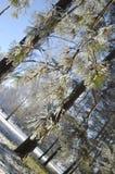 Winterbaumaste umfasst mit Schnee Stockfotografie