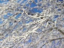 Winterbaumaste umfasst mit Schnee Lizenzfreie Stockfotografie