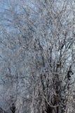 Winterbaumaste vertikal Stockfotografie